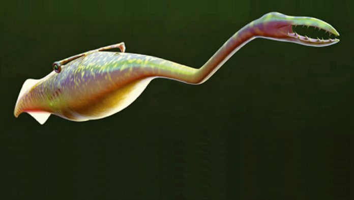 Il Tully monster